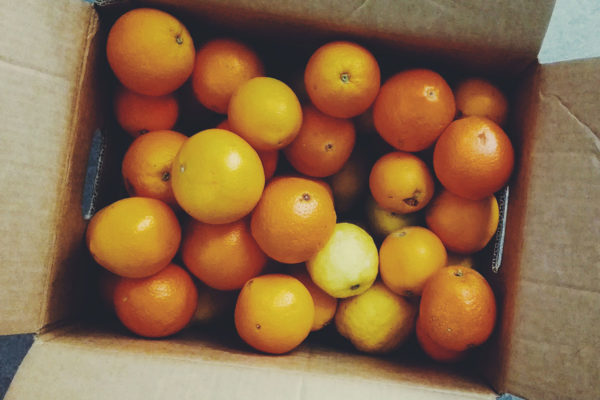 Bio-Orangen online kaufen - direkt vom Erzeuger von Mallorca Spanien versandkostenfrei von Fet a Sóller