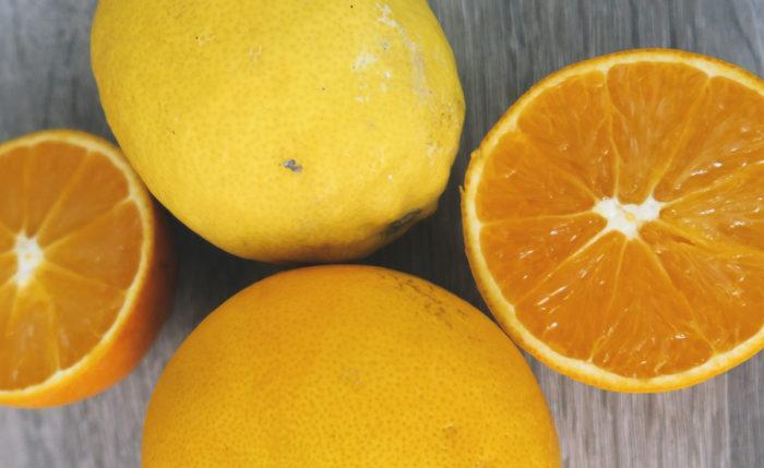 Bio Orangen günstig online bestellen - direkt vom Erzeuger von Mallorca Fet a Sóller gratis Versand