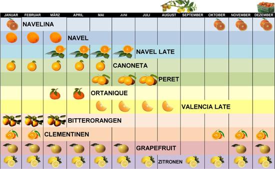 Erntezeit Orangen und Zitrusfrüchte