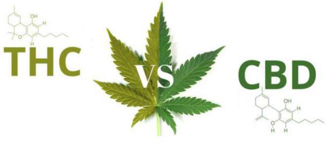 CBD im Vergleich zu THC