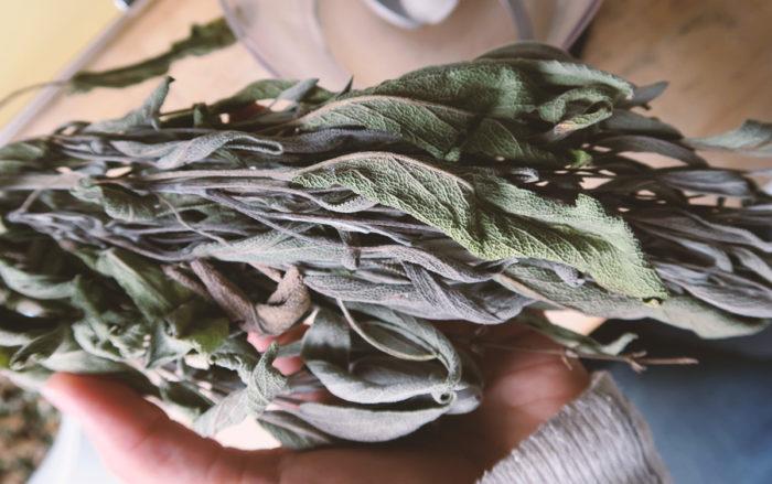 Getrockneter Salbei aus dem Garten gegen Halsschmerzen für selbstgemachte Hustenbonbons mit Ingwer und Nelken